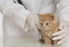 Image result for Veterinary Services