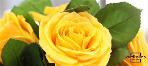 asombrosas imagenes de rosas amarillas imagenes de el significado de las rosas amarillas verdissimo