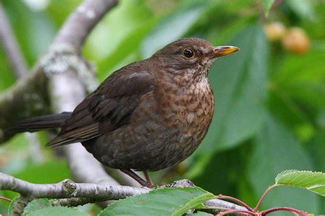 vögel im garten bestimmen vogel im garten bilder das beste aus wohndesign und