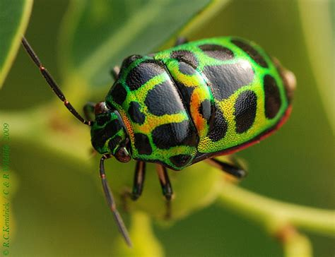 colorful bugs other colorful bugs like me a gallery on flickr