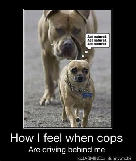 hilarious dogs 25 best ideas about pictures on dogs pictures