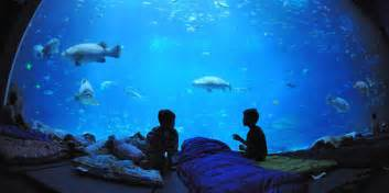 underwater homes aquarium bedroom archives home caprice your place for