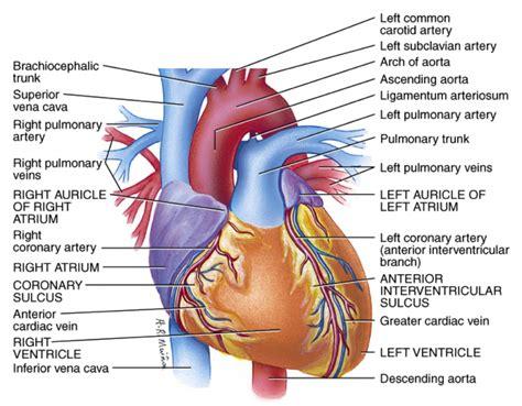anatomy diagram anatomy interior view diagram of anatomy
