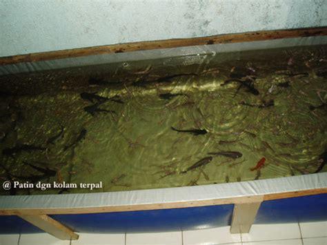 Jual Terpal Kolam Ikan Samarinda budidaya dan pembibitan ikan patin pasopati