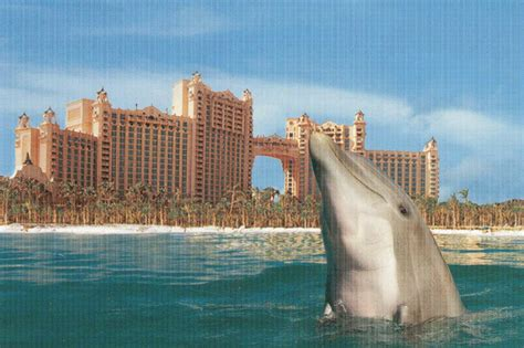 hotel atlantis bobby romano blogs big break atlantis i m hooked