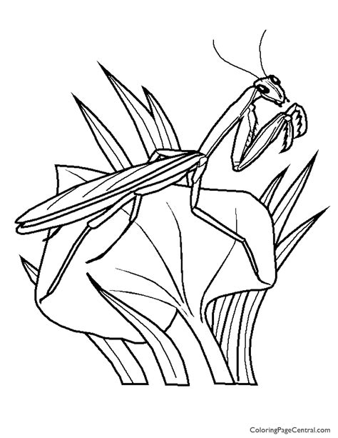 praying mantis coloring page sketch coloring page