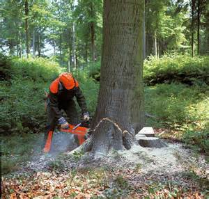 should forest trees be cut made by at