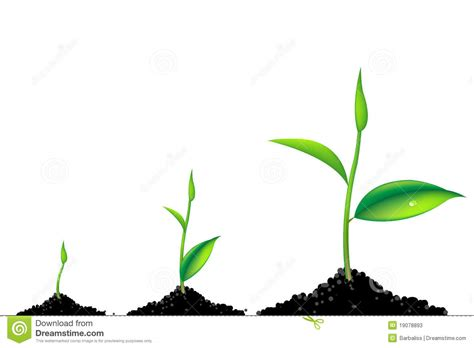 Home Plant Sprouts Clipart 61