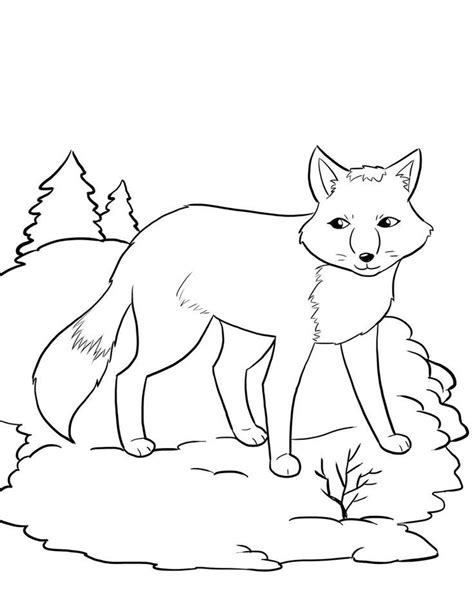coloring pages arctic animals arctic fox coloring page az coloring pages