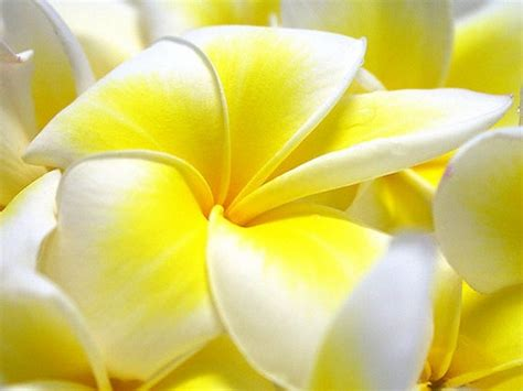 wallpaper flower full size flowers wallpapers for desktop full size wallpaperhdc com