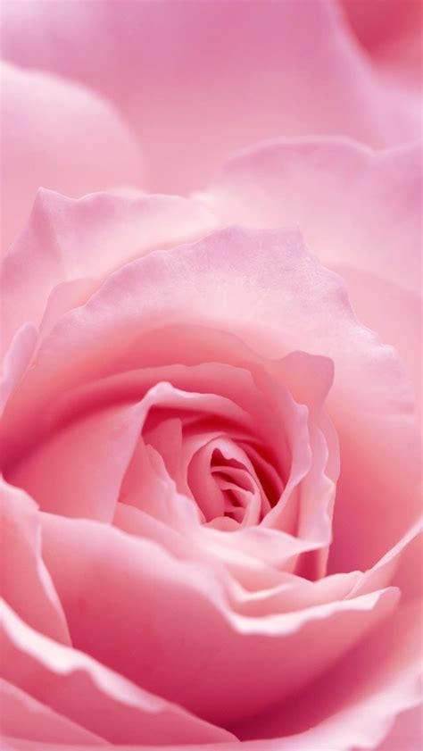 Gamis Roseflowry 88 best images about iphone hd wallpapers on jinx hd widescreen wallpapers and
