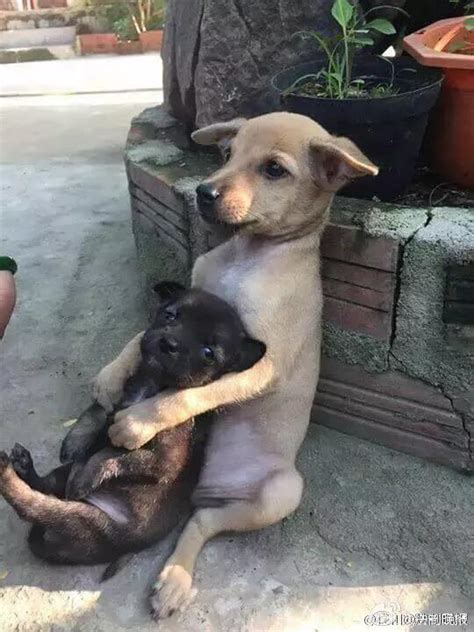 puppies hugging they rescued two puppies from the what they do seconds later tears heroviral