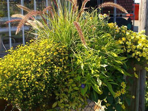 bilder für wintergarten balkon bepflanzung idee
