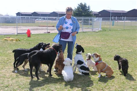 dog attack news dog daycare dog boarding and dog sitterz offers dog daycare socialization and training
