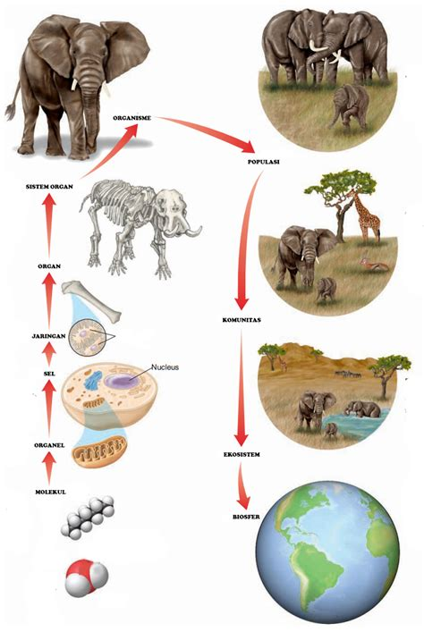 Biologi Modern Biologi Sel Wildan Yatim pengertian dan struktur tingkat organisasi kehidupan lengkap generasi biologi
