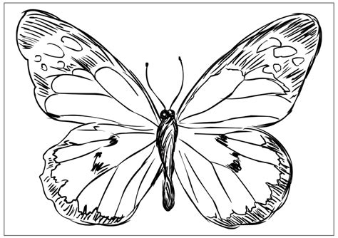 butterfly patterns coloring pages butterfly patterns to color az coloring pages