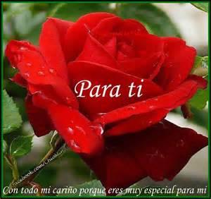 Feliz domingo para ti esta rosa con amor cary gran pinterest