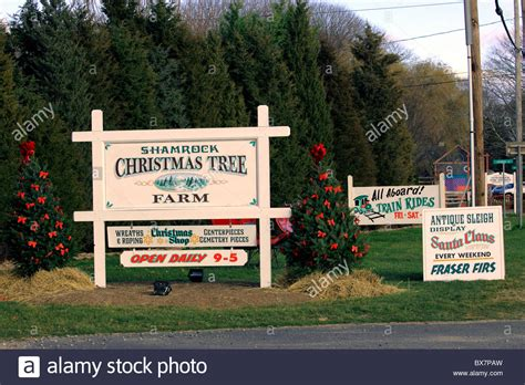 shamrock christmas tree farm mattituck long island ny