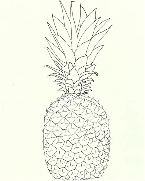 printable line art free pineapple watercolor printable the graphics fairy