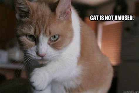 Unamused Cat Meme - cat is not amused unamused cat quickmeme