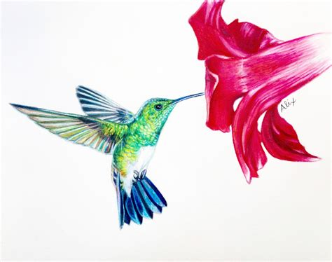 how to draw a hummingbird on a flower hummingbird colored pencil drawing original