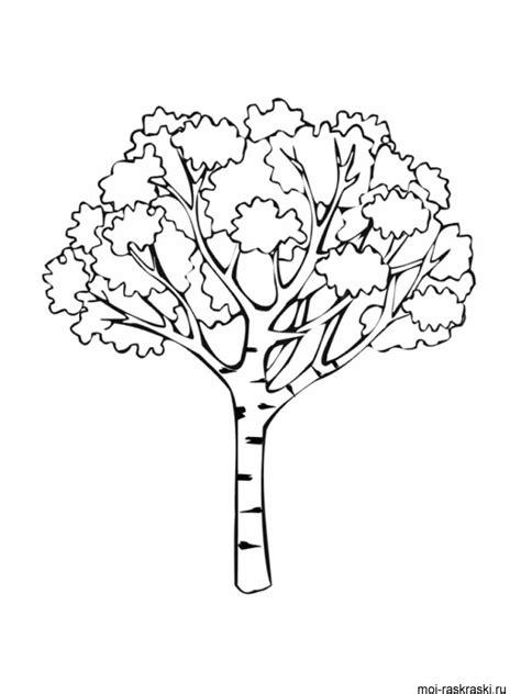 birch tree coloring page birch tree coloring pages for kids free printable birch