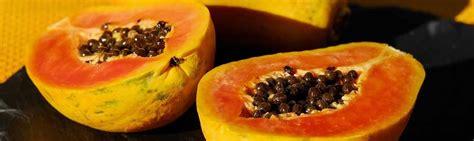can dogs eat papaya can chinchillas eat dried papaya facts