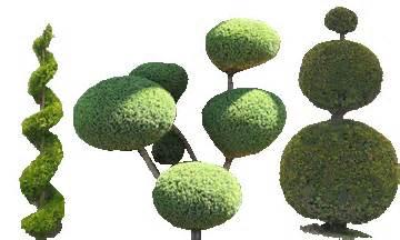 Topiary Define - glasgow lawn care topiary