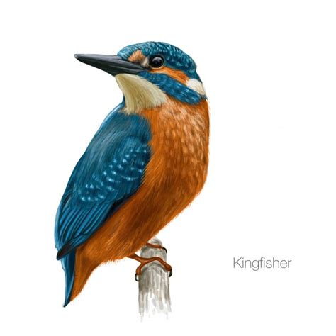 how to your to be a bird the meaning and symbolism of the word 171 bird 187