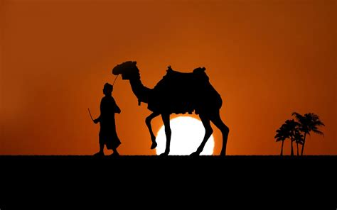 theme tour definition 44 camel animals photos images pictures hd wallpapers