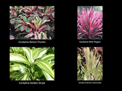 tropical plants chicago patio plants tropical landscape plants color and