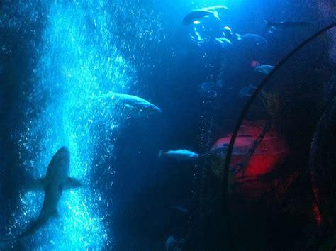 Kratzer Im Aquarium Entfernen by Acrylsanierung Kunststoffscheiben Polieren Scratch Ex