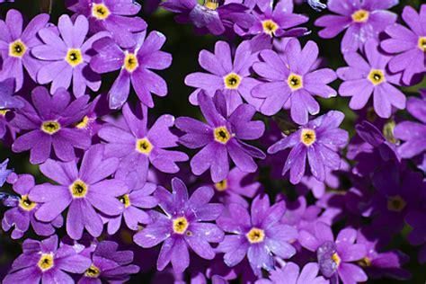 fiori fuxia giorgiobizzotto it fotografie di giorgio bizzotto