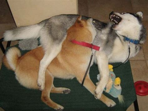 bad puppy behavior bad 4 the dominant