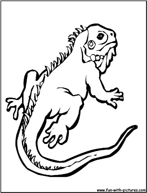 gecko free colouring pages