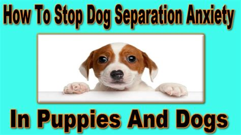 how to treat anxiety in dogs how to cure my s separation anxiety spca approved how to treat