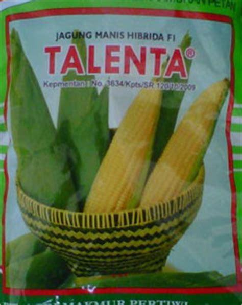 Benih Jagung Talenta bibit jagung manis hibrida talenta bibit unggul