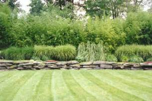 Ornamental Grass Bamboo And Fern Gardens Hickory Hollow Grass Garden Design
