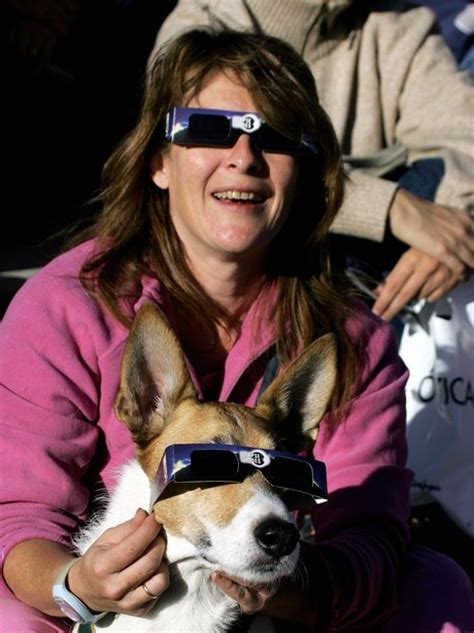 dogs and solar eclipse pets and wacky ways to the eclipse