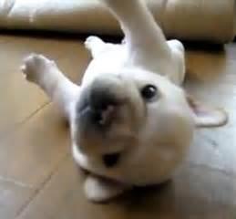 Dog Door 仔犬 の フレンチブルドッグ 可愛い 犬 の 動画 ブログドア 犬のかわいい写真 Naver まとめ