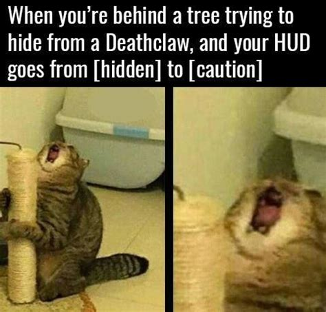 8 Ways To A Laugh At Your Cats Expense by 35 Cat Memes To Make You Laugh Cat Memes