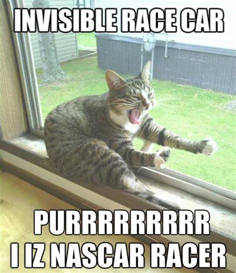 Funny Memes 2014 - funny cat memes