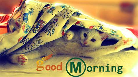 wallpaper full hd good morning good morning wallpapers hd download free 1080p