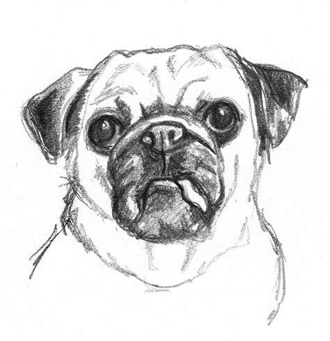 drawing of a puppy sketches pencil drawings of dogs