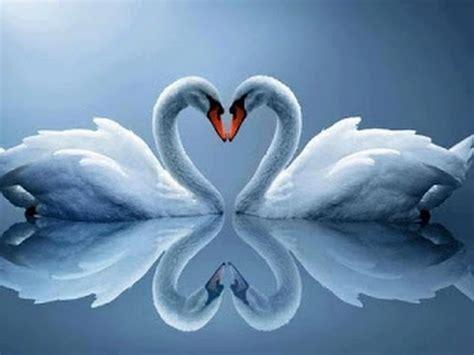 imagenes romanticas lindas musicas romanticas internacionais s 243 as melhores youtube