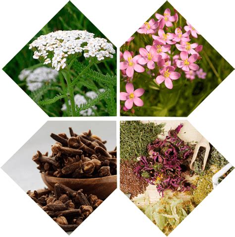 Hermuno Herbal Cacing Parasit Original agen jual obat hermuno intoxic parasit 081315593335
