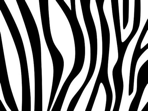 zebra lines pattern draw zebra stripes pinterest close up pictures and design