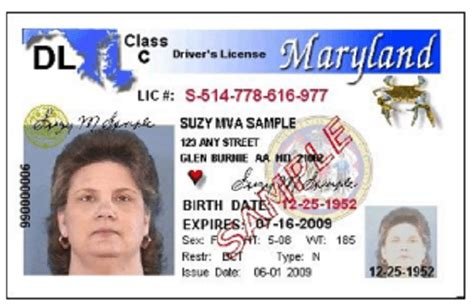 drivers license template torrent
