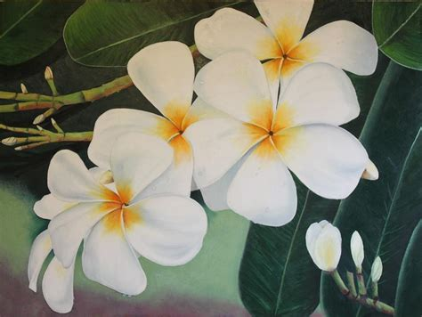 plumeria painting white plumeria painting by teri vaughn