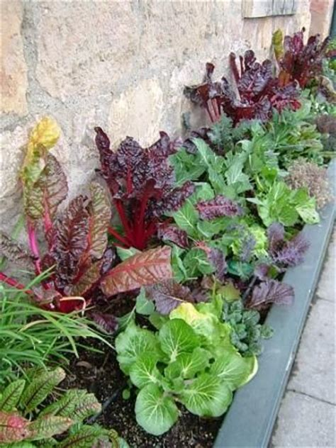1000 images about herb vegetable and otherwise edible 1000 ideas about small vegetable gardens on pinterest